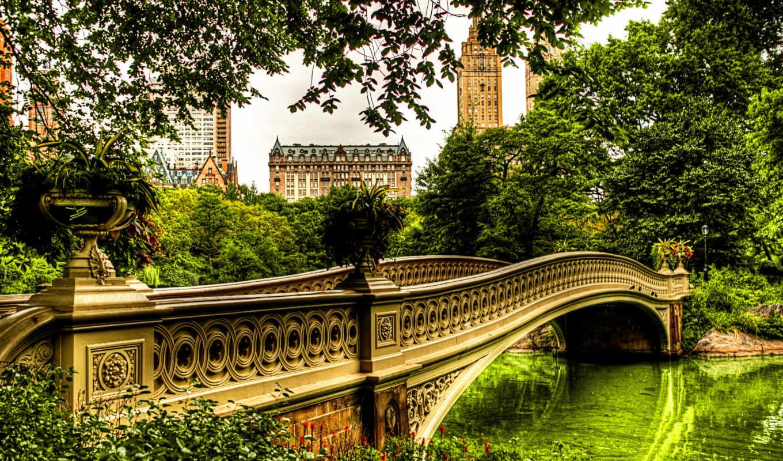 лес, деревя, река, зелёный, мост,