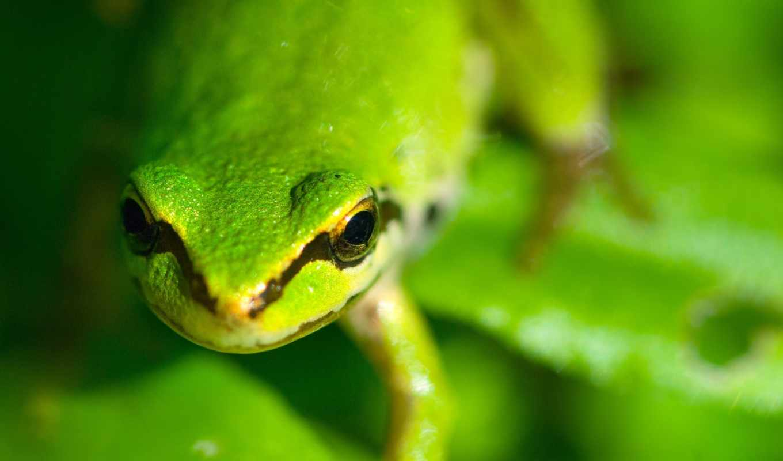 photo, green, , full, view, download, panda,