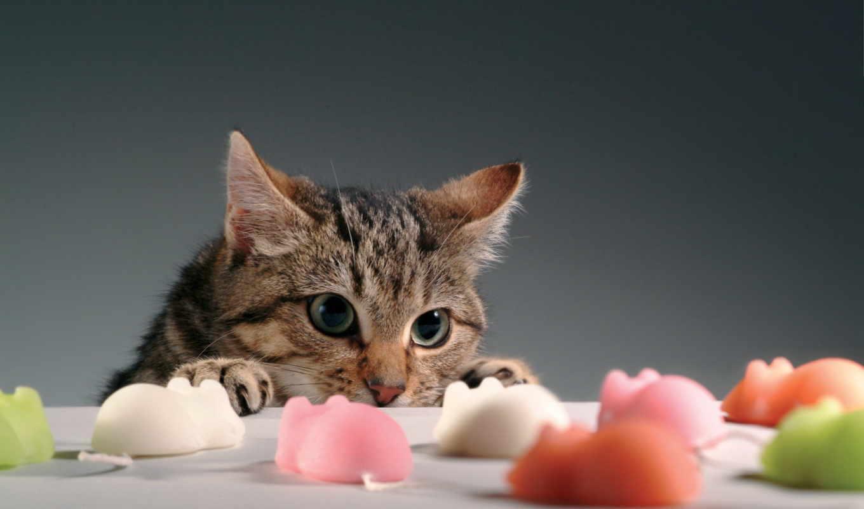 веселые, животными, фона, диета, котоматрицы, кошек, кошки,