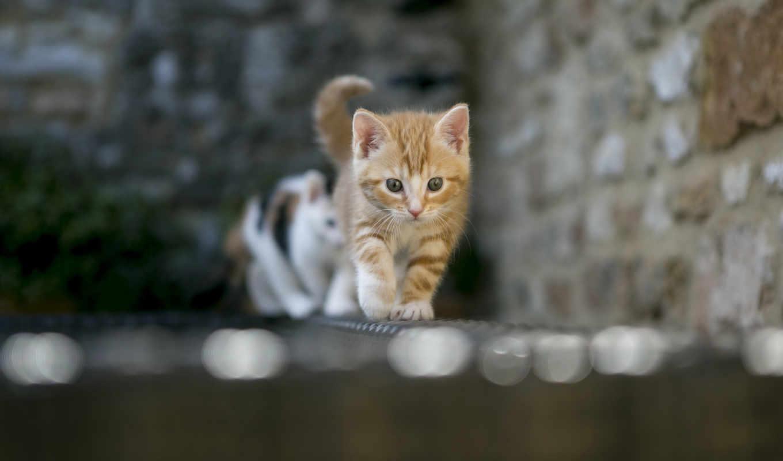 котенок, гравитация, zhivotnye, рисунки, кошки,
