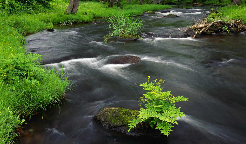 река, горная, вся, лесу, природы, красавица,