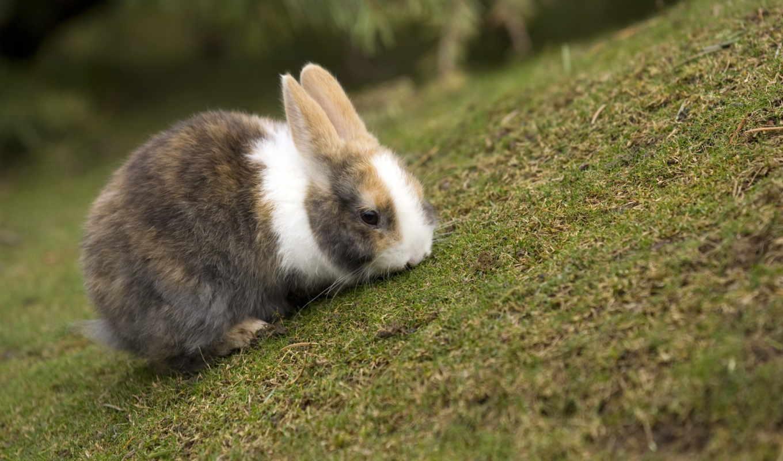 krolik, кролик, кролики, кроликов, выставка, беларусь, птицы, bunny,