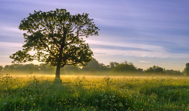 природа, desktop, дерево, свет, sun, небо,