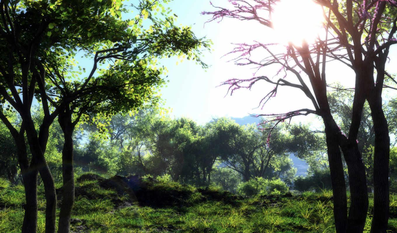 природа, art, klontak, деревя, трава, sun,