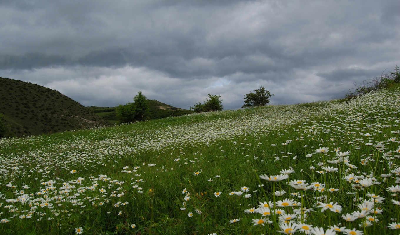 поле, красивое, рoмашек, ромашки, tilt, vga, dell,
