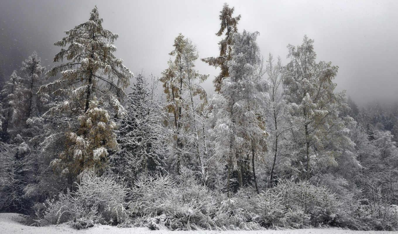 природа, winter, лес,