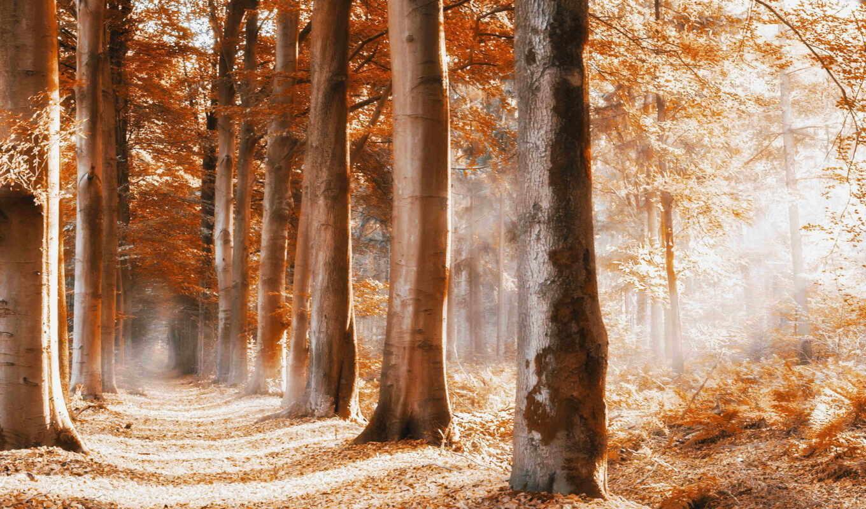 дерево, природа, fore