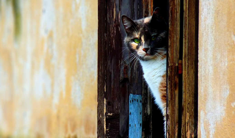 кот, обои, quot, апреля, метки, дата, кошки, дверь