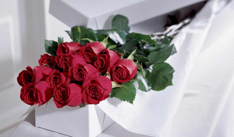 розы, цветы, roses, подарок, flowers, картинка, коробка, бутоны, картинку, правой, мыши, ней, смотрите, выберите, ванда, кнопкой, рисунки,