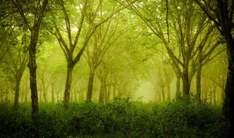 лес, деревья, лето, природа, смотрите,