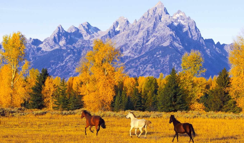 осень, горы, horse, простор, свобода, лошади, кони, ipad,