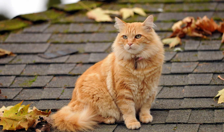 кот, крыше, марта, red, место, сидит, санкт, кота,