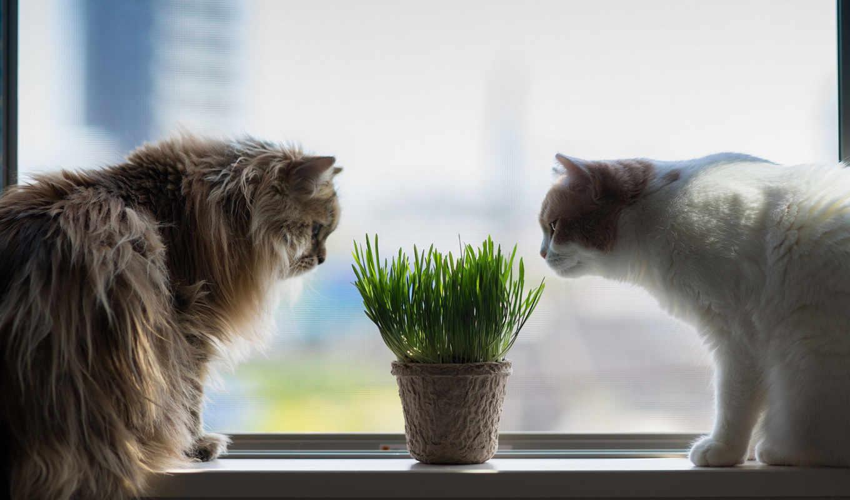 cats, окно, desktop, free, resolution, pictures, definition,