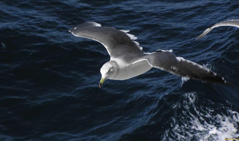 albatross, ан, они,