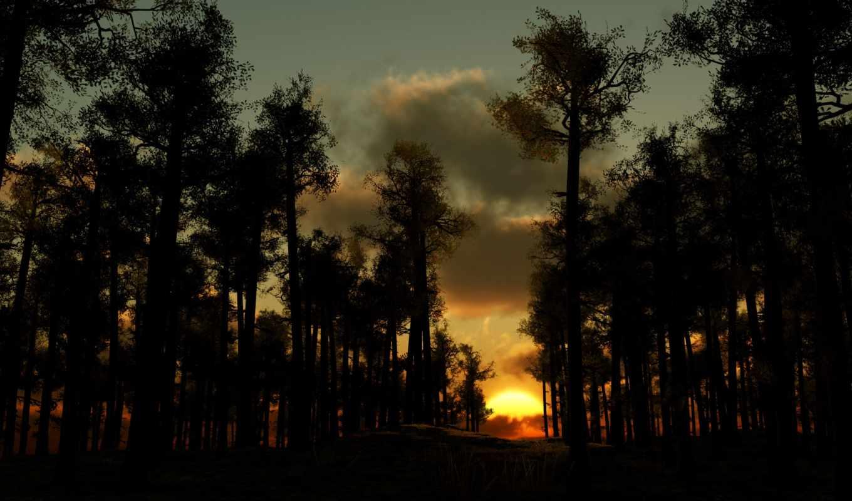 лес, закат, вечер, деревья, солнца, тучи, wallpaper, рисунки, forest, популярные, фотографии,