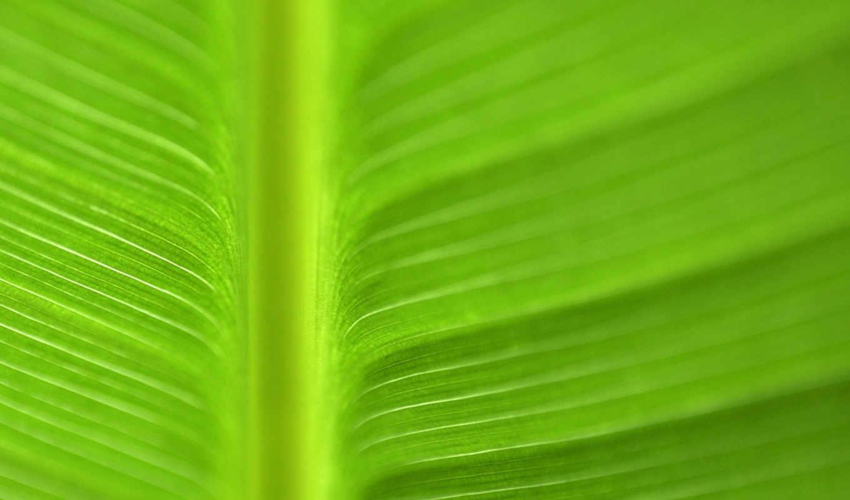 картинку, выберите, full, изображение, чтобы, код, превью, images, nature, green, макро, wallbox, картинка, правой, кнопкой, пункт, сборник, background,