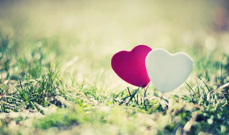 сердце, трава, макро