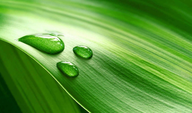 природа, листья, капли, зелёных, листьях, высокого, качества, брендами, nevseoboi, макро,