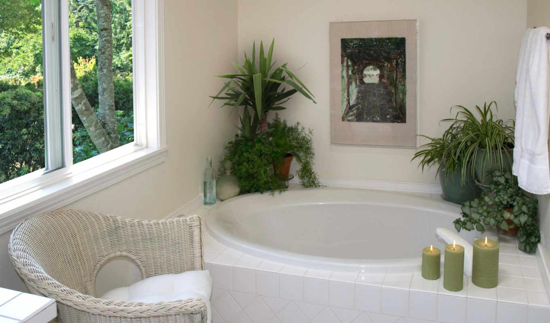 ванной, цветы, растительность, комнате, комнаты, комнатные, дек, интерьер,