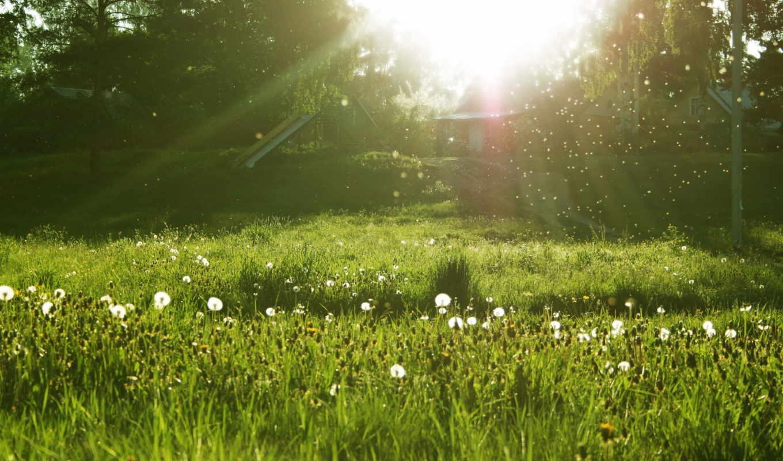 природа, янв, совершенно, галерее, картинку, нашем, сайте, трава, одуванчики, поле, картинок,