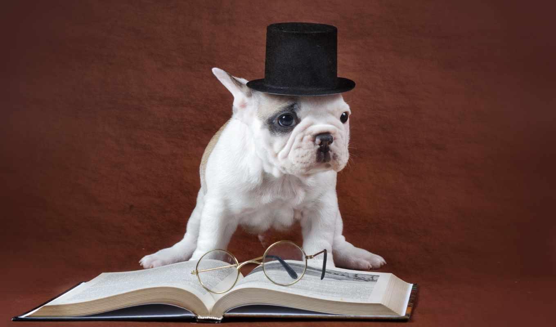 заставки, собака, приколы, книга, смешные, широкоформатные, очки,
