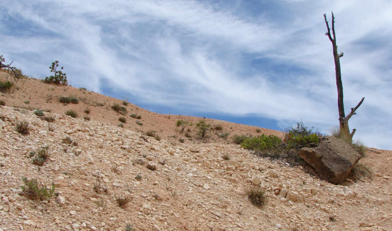 природа, desert, hd, full, images, tree, пейзажи, background, backgrounds, sky,