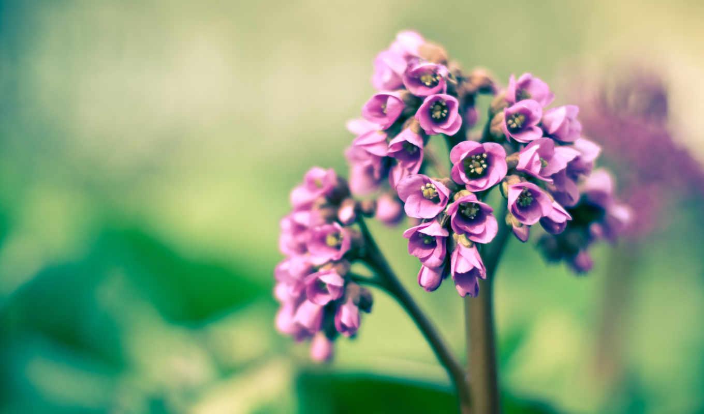 маленькие, стебле, цветки, flowers, desktop, вернуться, картинку, purple, flower, разрешении, картинка, колокольчики, выберите, tags, фиолетовые, tweet,