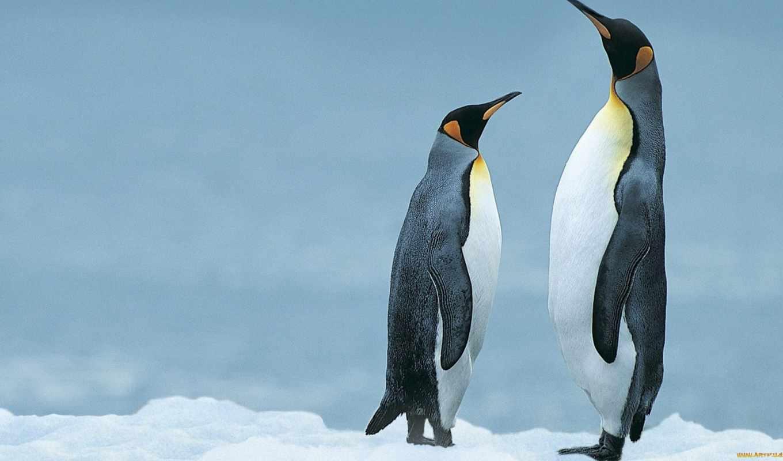bbc, пингвины, penguins, самых, пожалуй, одни, природы, мир, мира, представителей, птичьего, известных,