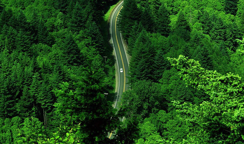 orman, haftası, ilgili, ile, resimli, sözler, yaz, şiir,