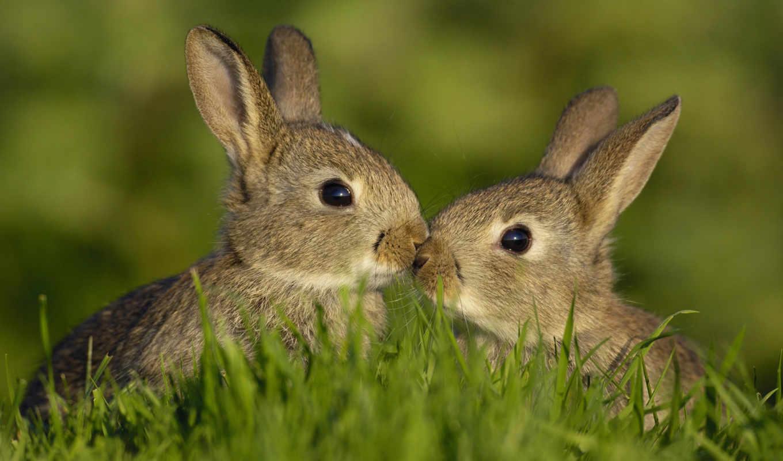 высокого, качества, нашем, сайте, выберите, need, кролик, этого, кролики,