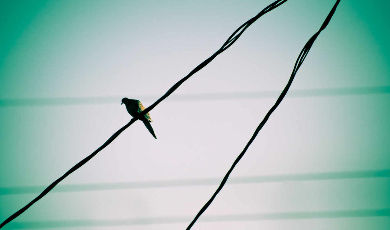 were, you, птица, эти, marketplace, быстро, possible, тегам, найти, следующим,