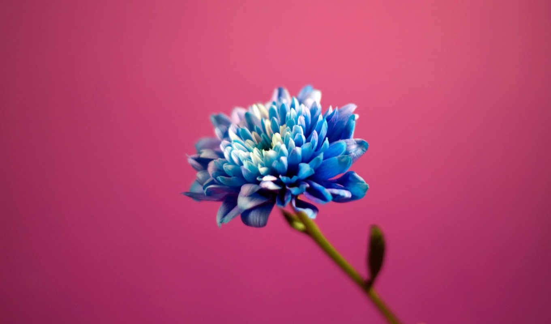 счастье, misono, retweets, like, розовый,