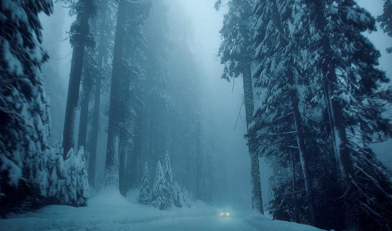 природа, снег, winter, широкоформатные, деревья, елки, дорога, дерево, красивые,