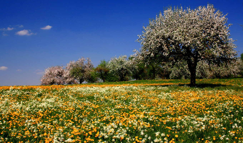 цветы, поле, луговые, лето, яблоня,