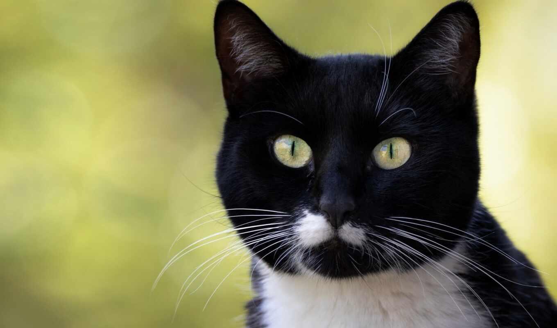 кот, white, взгляд, фотограф, black, martin, снег, морда, striped