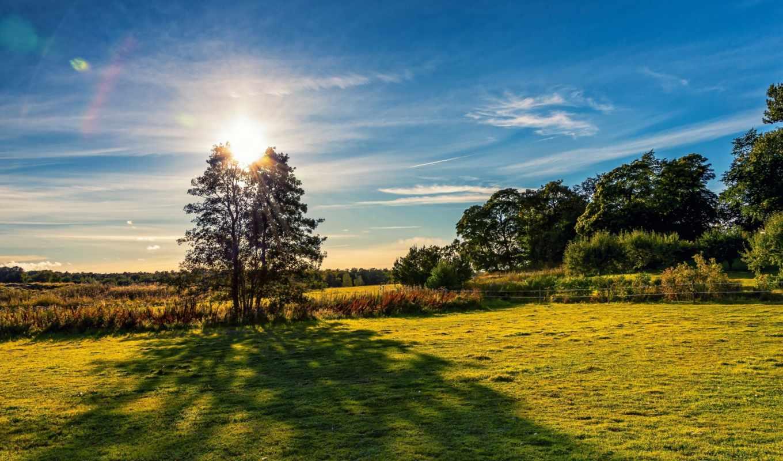 finland, деревья, поле, пейзаж, картинку, картинка, ней, правой, кнопкой, выберите, мыши,