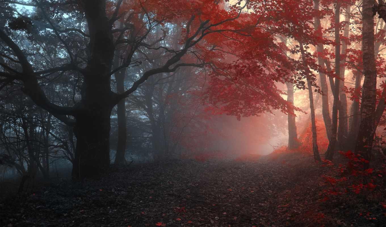 осень, туман, дорога, лес, деревья, листья, природа, desktop,