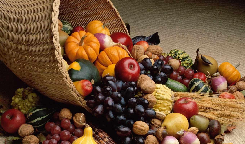 science, диета, должна, питания, полезные, здоровая, здоровой, пище, таково, понятия,