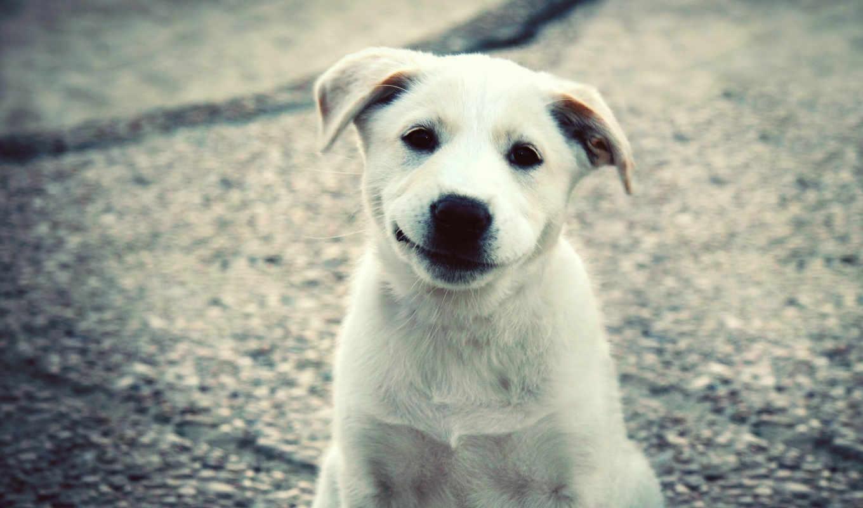 белая, собака, собаку, колл, собаки, говорят, снится, чему, сонник, равно,