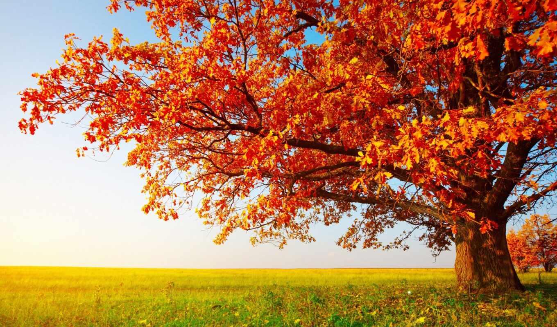 дерево, пасть, осень, tent, природа, фон, free, great