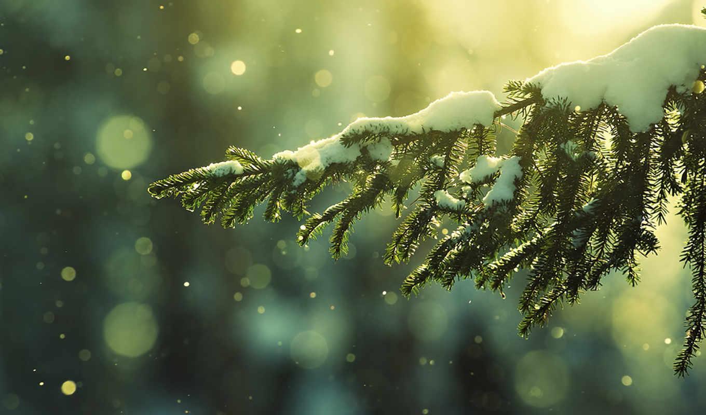 зима, снег, природа, новогодние, ели, ветка, слегка, присыпанная, снегом, ipad, заставки, ёль, солнечный, картинка, денек,
