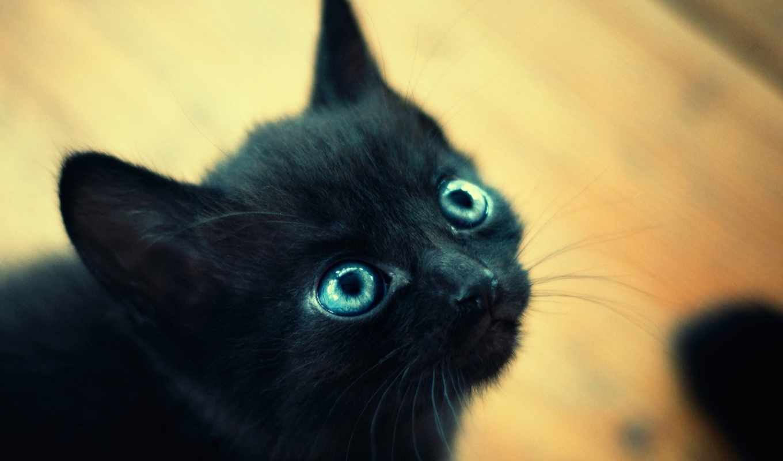 котенок, черный, глаза, макро, котенка, мордочка,