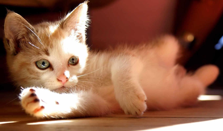 лежит, котенок, cats, смотрит, sun, кот,