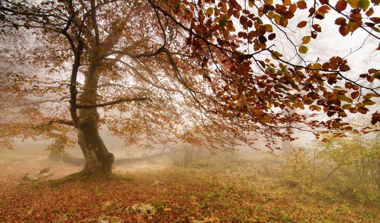 фотообои, дерево, фотообоев, стену, осень, интерьере, цветущее, скале, постеры,