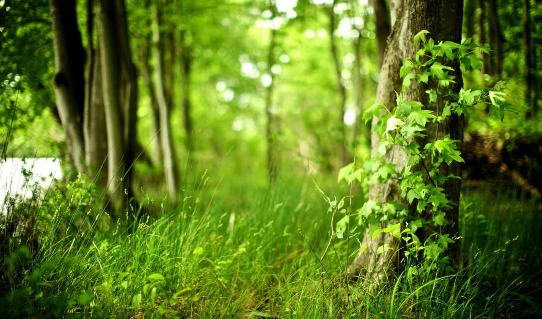 природа, лес, trees, красивые, air, fresh, чистота, растения, life, свежесть, трава,