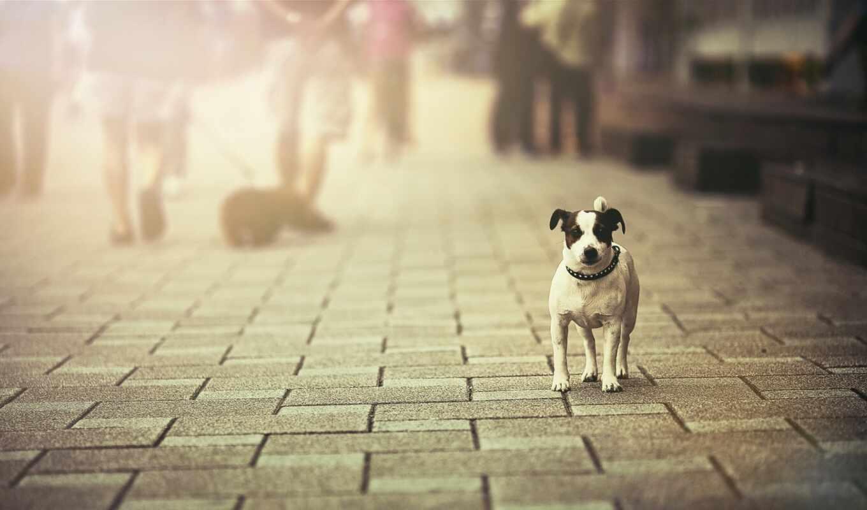 щенок, собака, одиночка, улица