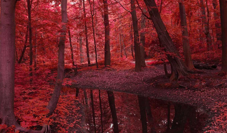 листья, деревья, природа, река, пейзаж, лес, вода,