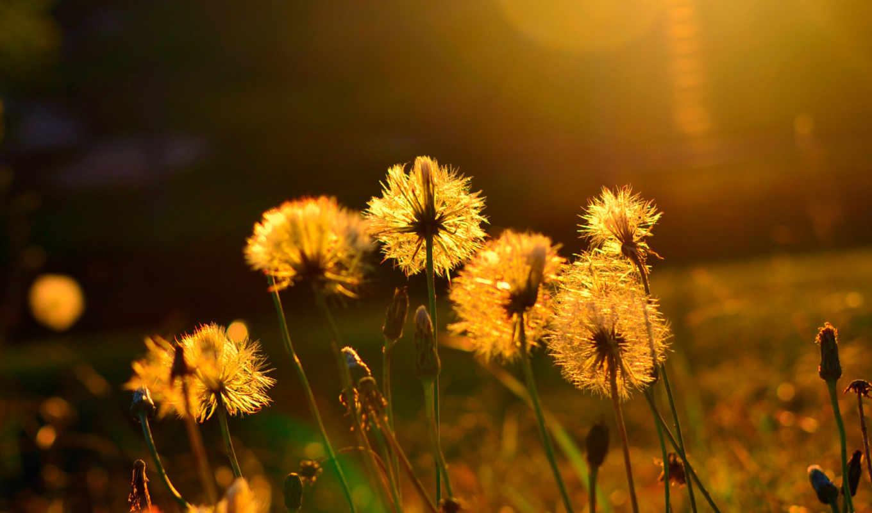 summer, тепло, цветы, sun, красивые, настроение,