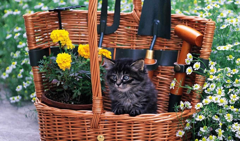 котенок, альбома, fone, полевые, корзине, цветами,