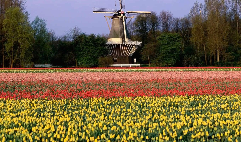 holland, mill, landscape, summer, тюльпаны, тегом, заставки, кёкенхоф, нидерланды,